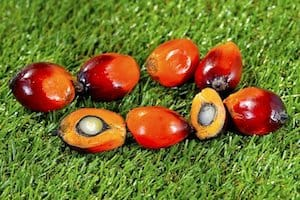 RED PALM OIL KERNELS WHOLE AND SLICED ON BACKGROUND OF GREEN GRASS